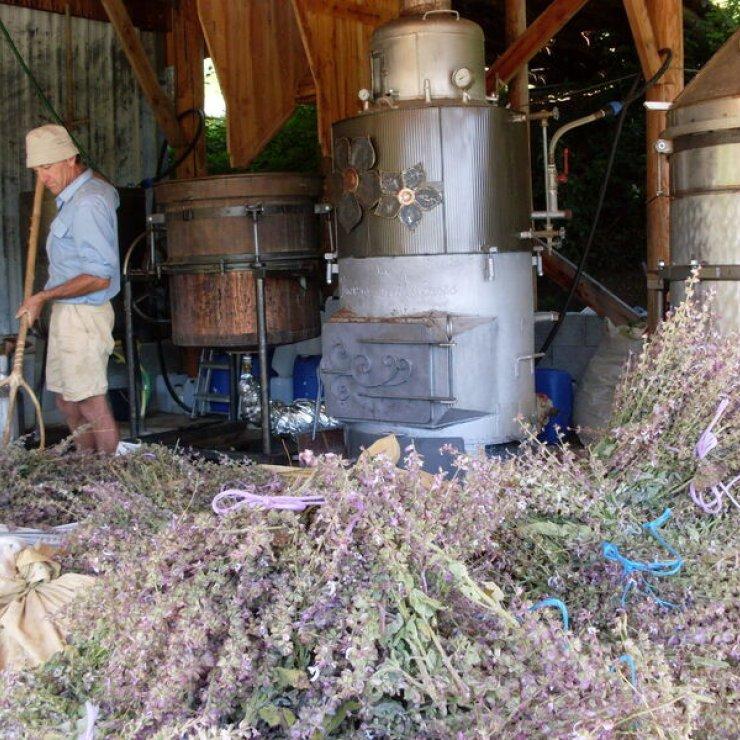 La Rivière des Arômes à Rosans - Distillation de plantes aromatiques et médicinales (Copyright : La Rivière des Arômes)