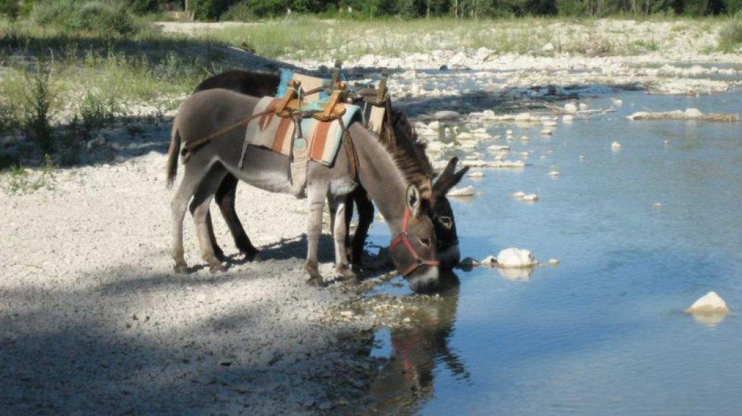 Bamboul'âne - Randonnée avec des ânes (Copyright : Claire STRAUSS)