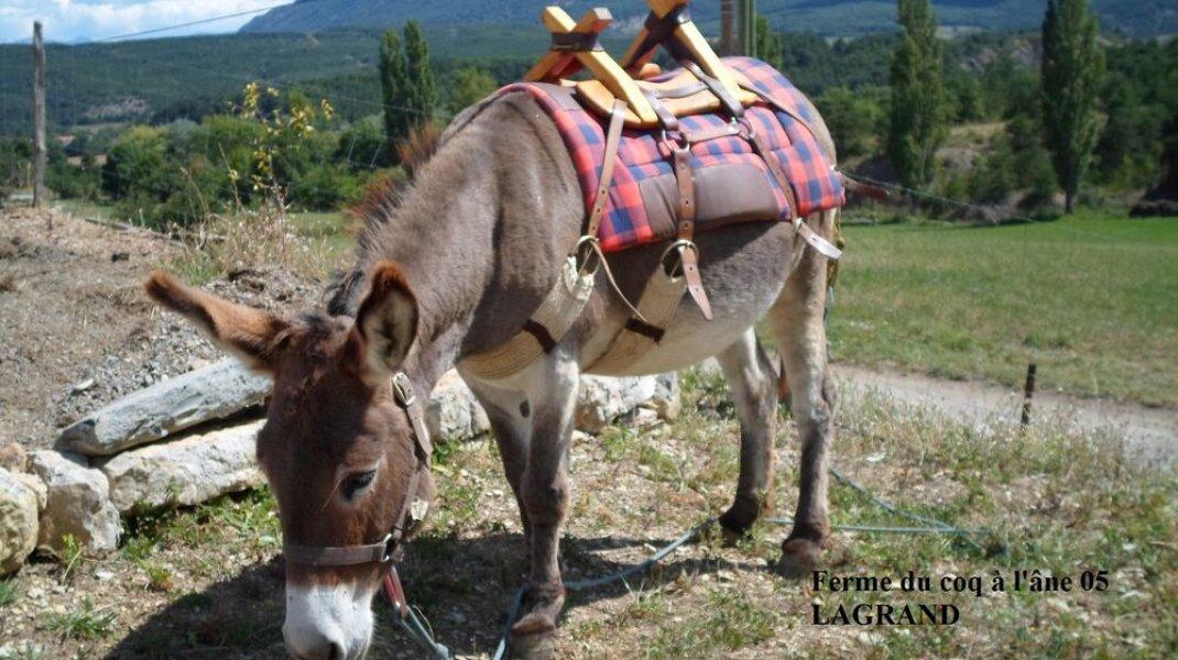 Promenade avec un âne (Copyright : P.Omer)