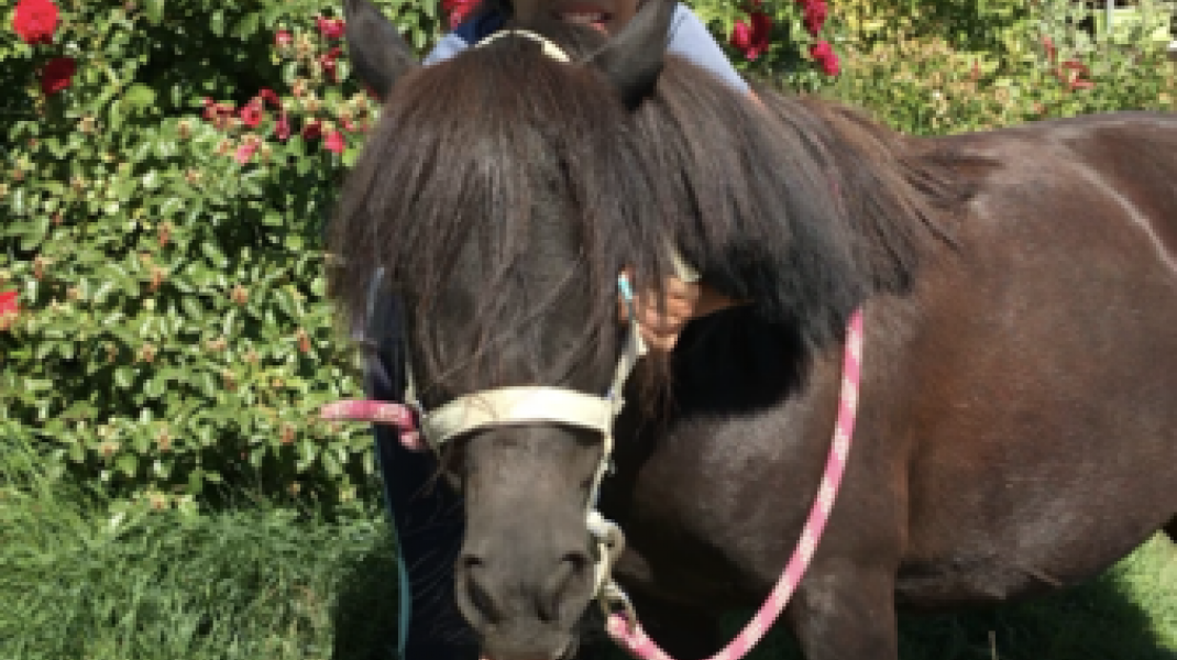 Les poneys du peyron (Copyright : Les écuries du Peyron)