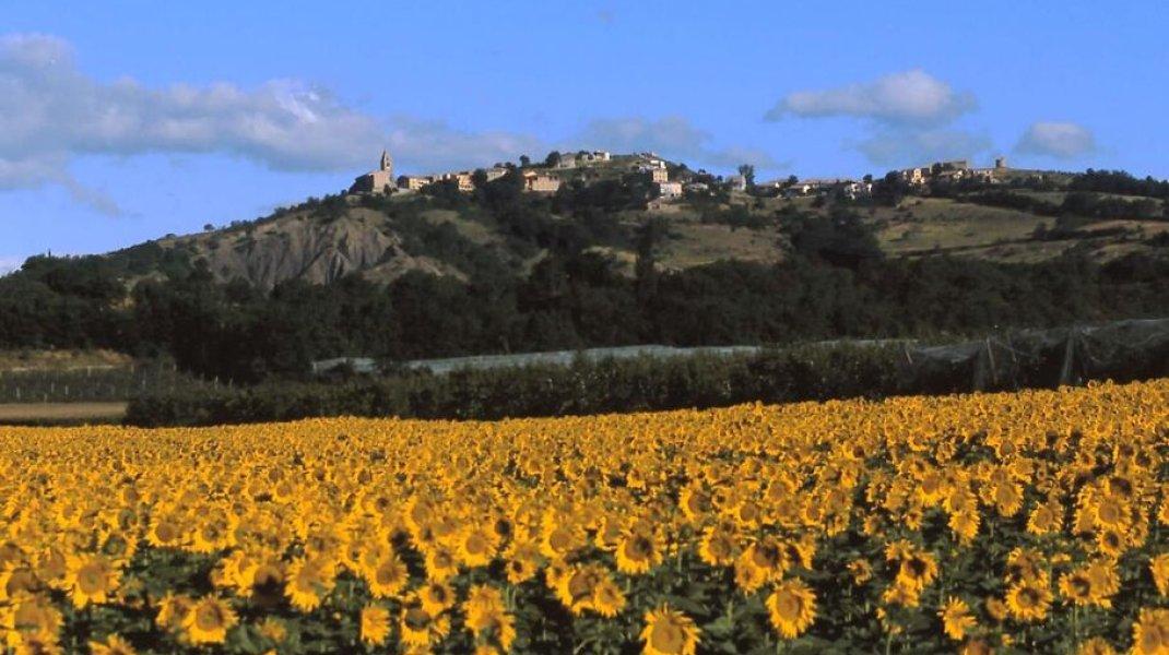 La Route Napoléon dans le Laragnais - Upaix et ses tournesols (Copyright : Office de Tourisme Sisteron Buëch)