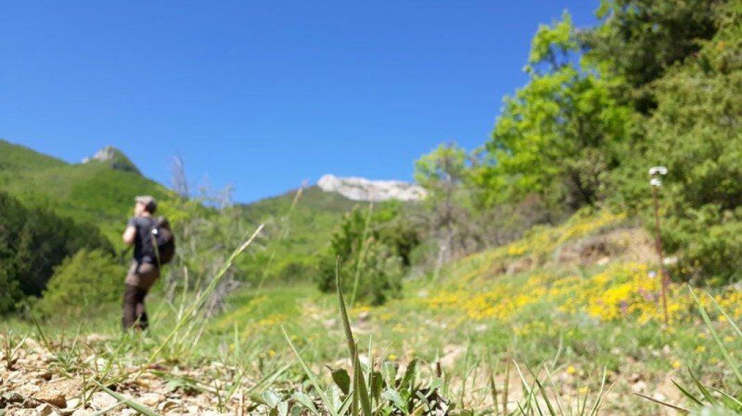 Itinéraire de rando La Boucle des Narettes - Environnement sauvage (Copyright : Communauté de Communes Sisteronais Buëch)