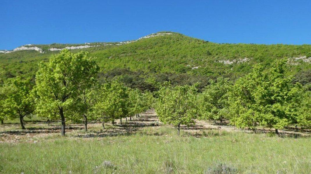 """Itinéraire de rando """"La boucle de la Plaine"""" - Arbres fruitiers en chemin (Copyright : Communauté de Communes Sisteronais Buëch)"""