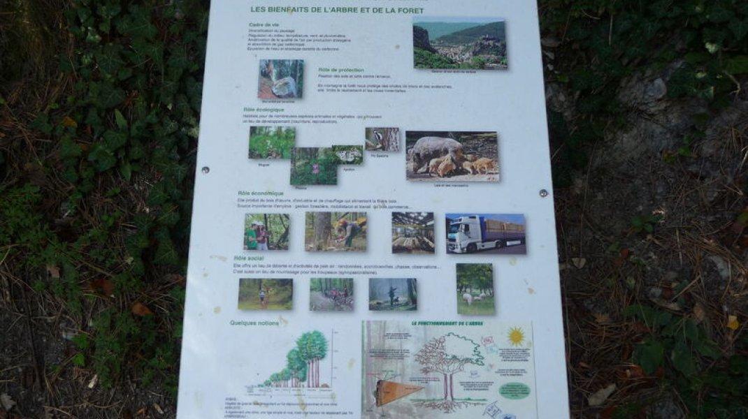 Sentier du Molard - Panneau (Copyright : Office de Tourisme Sisteron Buëch)