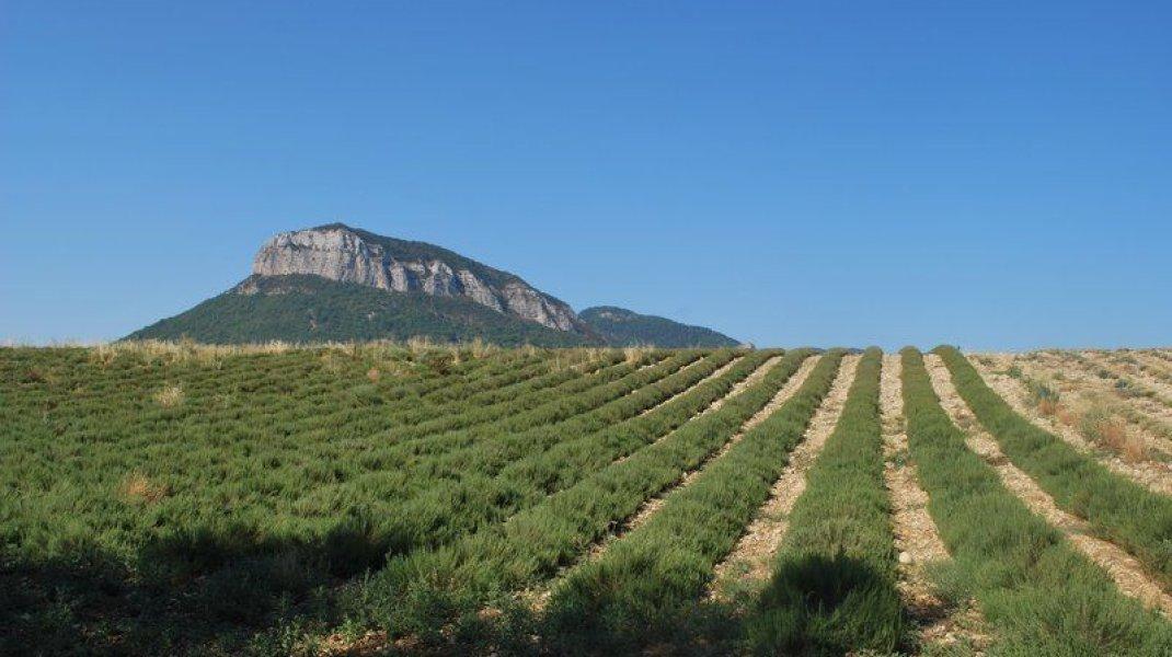 Circuit VTT Le Plateau de Garenne - Le Montagarde et champ de lavande (Copyright : Communauté de Communes Sisteron Buëch)