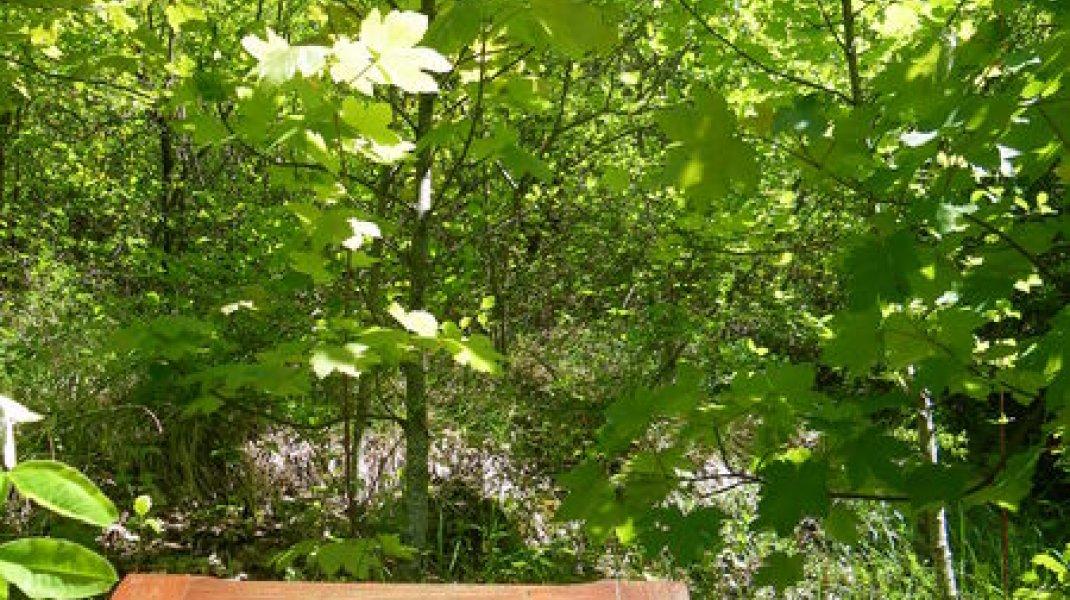 Sentier botanique à Orpierre - Sentier botanique du Belleric (Copyright : Office de Tourisme Sisteron Buëch)