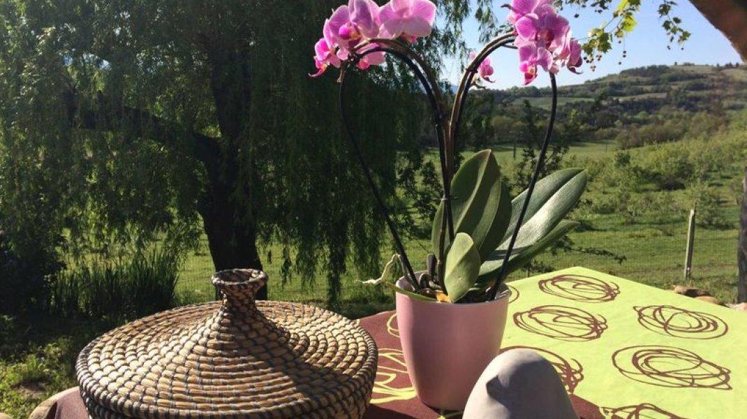 Les Gîtes d'Eliane - Orchidée (Copyright : Les Gîtes d'Eliane)