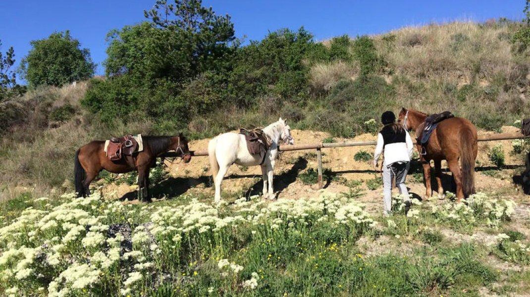 Les Gîtes d'Eliane - Les chevaux (Copyright : Les Gîtes d'Eliane)