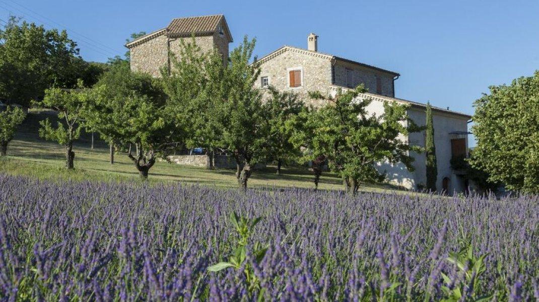 Le Moulin vu depuis son champ de lavande (Copyright : Gîtes de France)