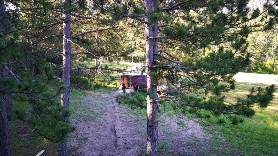 Cabanourte au milieu des arbres