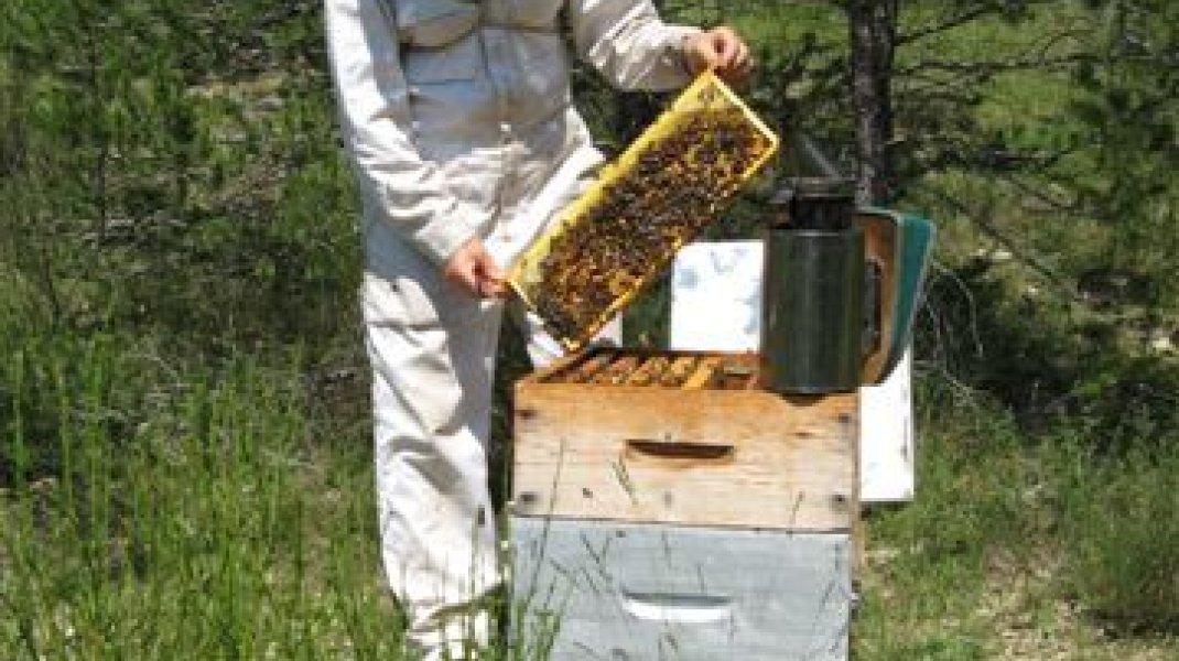 Yves et Elisabeth Bernard, apiculteurs à Orpierre - Au rucher (Copyright : Elisabeth et Yves Bernard)