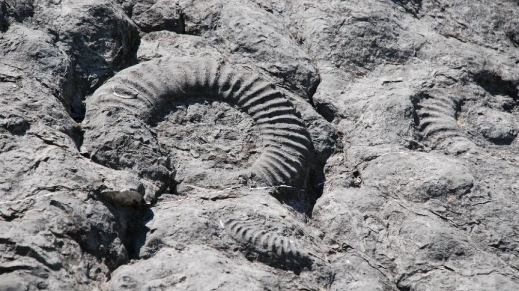 Dalle aux ammonites - Dalle aux ammonites (Copyright : Best of Provence Tours)
