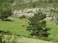 """Itinéraire de rando """"Tour du Riable"""" - Pâturages (Copyright : Communauté de Communes Sisteronais Buëch)"""
