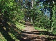 Sentier botanique du Molard à Sisteron - Sentier ombragé (Copyright : Communauté de Communes Sisteronais Buëch)