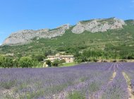 La propriété et les célèbres falaises d'Orpierre vue depuis notre champ de lavande (Copyright : Gîtes de France)