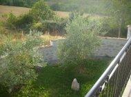 Maison de campagne Aux Deux Oliviers - Vue sur le jardin (Copyright : R.Pintz)