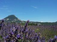 Rosans côté Lavande - Rosans côté Lavande (Copyright : Office de Tourisme Sisteron Buëch)