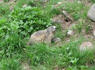 Route des Marmottes - Route des Marmottes (Copyright : Best of Provence Tours)