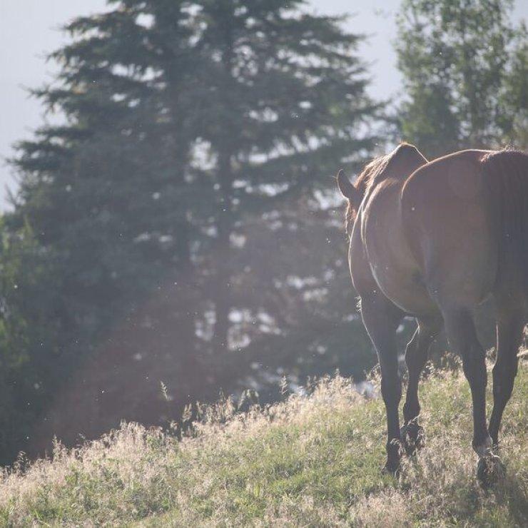 Randonnée à cheval - Randonnée à cheval (Copyright : Pixabay)
