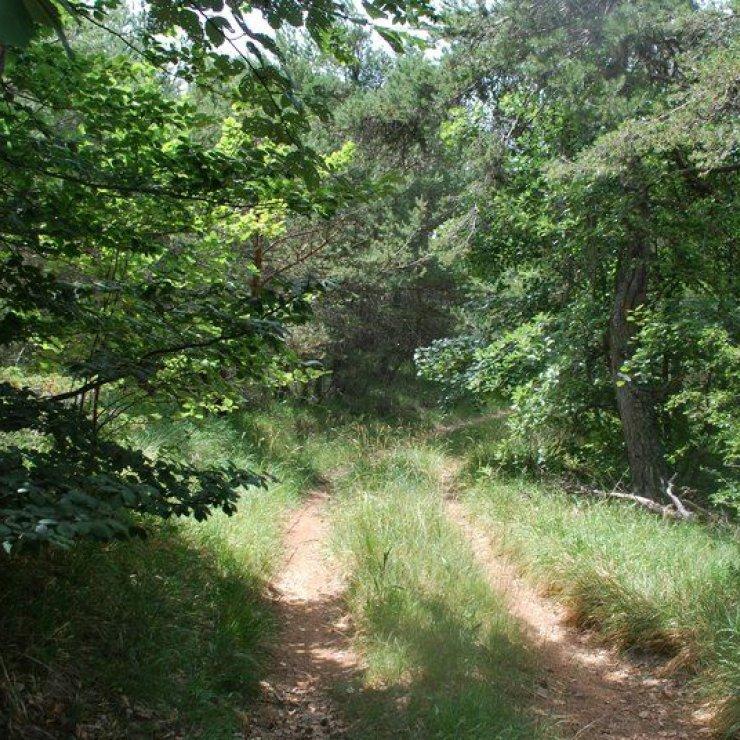 Circuit VTT Grand Bois - Sentier ombragé en sous bois (Copyright : Communauté de Communes Sisteron Buëch)