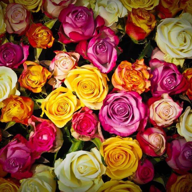 Fleuriste (Copyright : Pixabay)